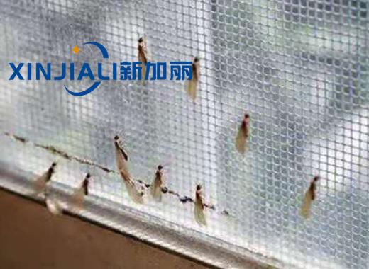 贵州灭白蚁