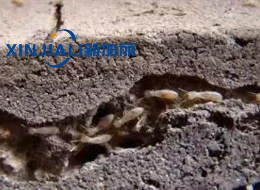 贵州小区灭白蚁