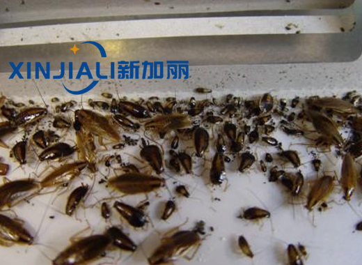 贵州灭蟑螂